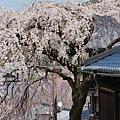 京都-二年板 (6)