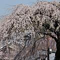 京都-二年板 (7)
