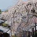京都-二年板 (8)
