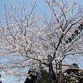 京都-清水寺清水板 (24)