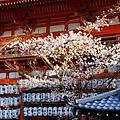 京都八板神社 (18)