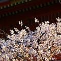 京都八板神社 (43)