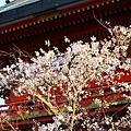 京都八板神社 (44)