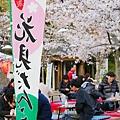 京都圓山公園一本枝垂櫻-夜櫻 (34)