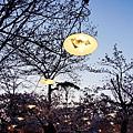 京都圓山公園-夜櫻宴 (2)
