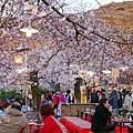 京都圓山公園-夜櫻宴 (17)
