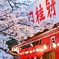 京都圓山公園-夜櫻宴 (18)