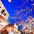京都圓山公園-夜櫻宴 (20)