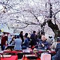 京都圓山公園-夜櫻宴 (23)
