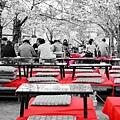 京都圓山公園-夜櫻宴 (25)