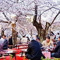 京都圓山公園-夜櫻宴 (30)
