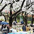 上野公園-櫻花雨 (13)