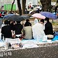上野公園-櫻花雨 (14)
