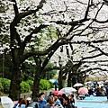 上野公園-櫻花雨 (15)