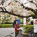 上野公園-櫻花雨 (21)