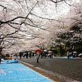 上野公園-櫻花雨 (24)
