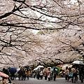 上野公園-櫻花雨 (25)