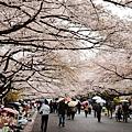 上野公園-櫻花雨 (27)