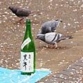 上野公園-櫻花雨 (33)