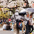 上野公園-櫻花雨 (36)