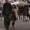 上野公園-櫻花雨 (38)