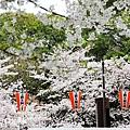 東京上野公園-櫻見便當 (8)