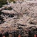 東京上野公園-櫻見便當 (22)