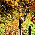 銀山公園及瀑布  (11)