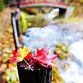 銀山公園及瀑布  (21)