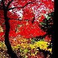 銀山公園及瀑布  (23)