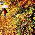 銀山公園及瀑布  (29)