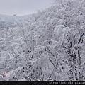 藏王山麓至樹冰高原-第一段 (35).jpg