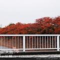 京都-鳥彌三 (22).jpg