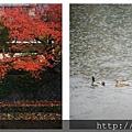 鳥彌三-京都米其林一星 (9)(001).jpg