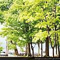 青森十和田湖 (6).jpg