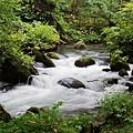 青森-奧入瀨溪流 (3)