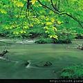 奧入瀨溪新綠