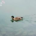 宜蘭梅花湖畔 (29)