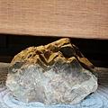 鐵板 懷石 染乃井 (68)