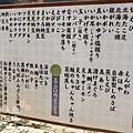 東京KITTE 根室花丸迴轉壽司 (9)