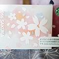 SAKURA STARBUCKS櫻花杯 (8)