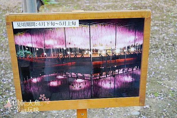 足利公園紫藤雨 (359)