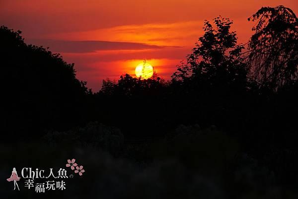 足利公園紫藤雨 (376)