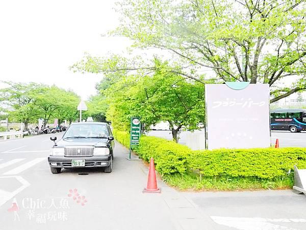 足利公園紫藤雨 (389)