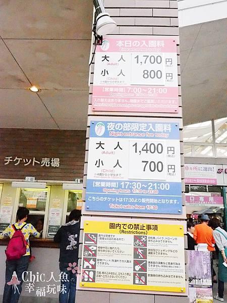 足利公園紫藤雨 (390)