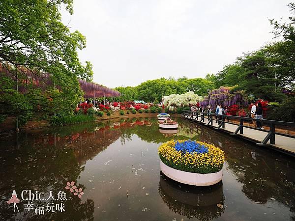 足利公園紫藤雨 (444)