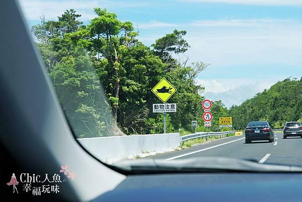 2 沖繩自駕遊-DAY 2 (11)