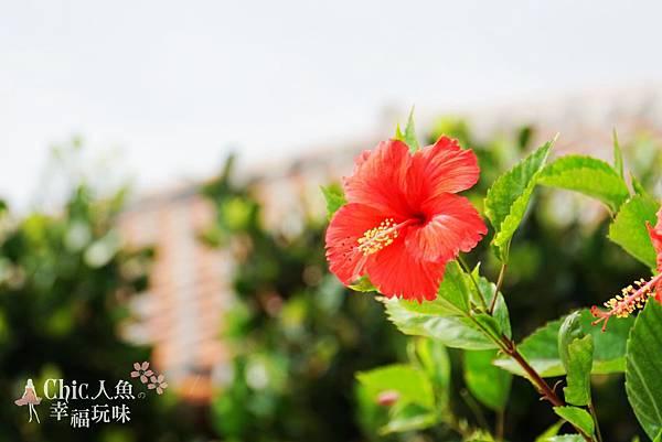 HOSHINOYA竹富島-check in石垣路地 (10)