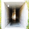 直島地中美術館 (115)