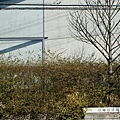 安藤忠雄-光之教會-大阪 (60)